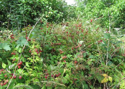 Jardin très fructifère mais quasi impénétrable.